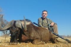 Black-Wildebeest-14