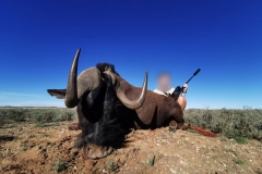 Black-Wildebeest-23