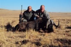 Black-Wildebeest-4