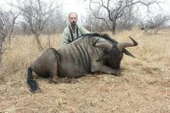 Blue-Wildebeest-JWK-Safaris-16