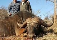 buffalo-hunting-02