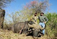 buffalo-hunting-05