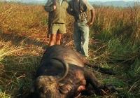 buffalo-hunting-09