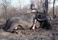 buffalo-hunting-10