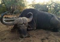 buffalo-hunting-20