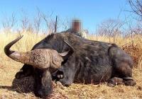buffalo-hunting-27