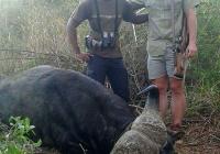 buffalo-hunting-28