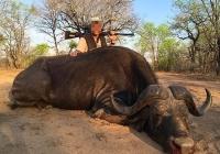 buffalo-hunting-39
