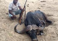 buffalo-hunting-44