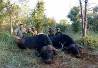 buffalo-hunting-48