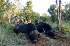 Buffalo-153