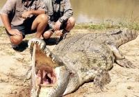Crocodile-24