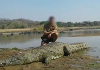 Crocodile-30