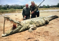 Crocodile-32