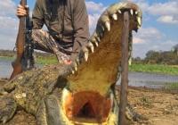 Crocodile-37