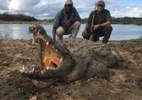 Crocodile-39
