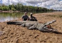 Crocodile-46