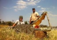crocodile-hunting-09