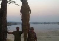 crocodile-hunting-14
