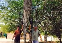 crocodile-hunting-16