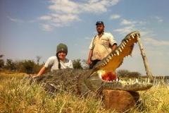 Crocodile-14
