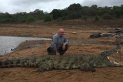 Crocodile-33