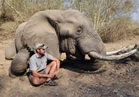 Elephant-121