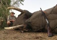 Elephant-122