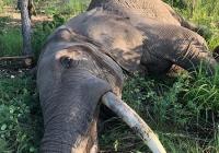 Elephant-124