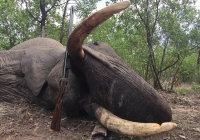 Elephant-138
