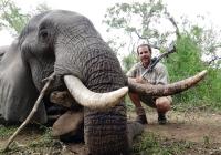 Elephant-139