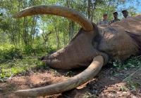 Elephant-144