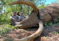 Elephant-145