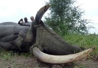 Elephant-151