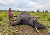 Elephant-153