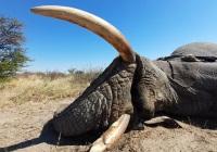Elephant-155