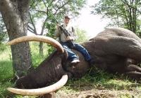 Elephant-39