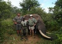 Elephant-44
