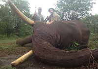 Elephant-48