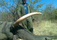 Elephant-55