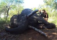 Elephant-58
