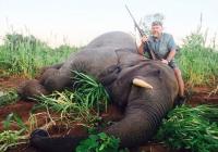 Elephant-63