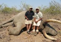 Elephant-76