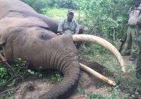 Elephant-98