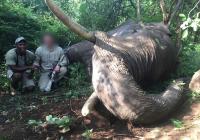 Elephant-113