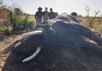 Elephant-116