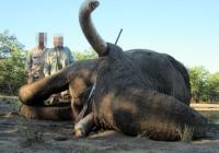 elephant-hunting-05