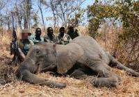 elephant-hunting-08