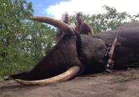 elephant-hunting-11