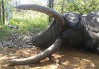 elephant-hunting-19